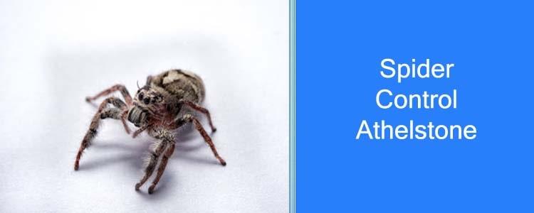 Spider Control Athelstone